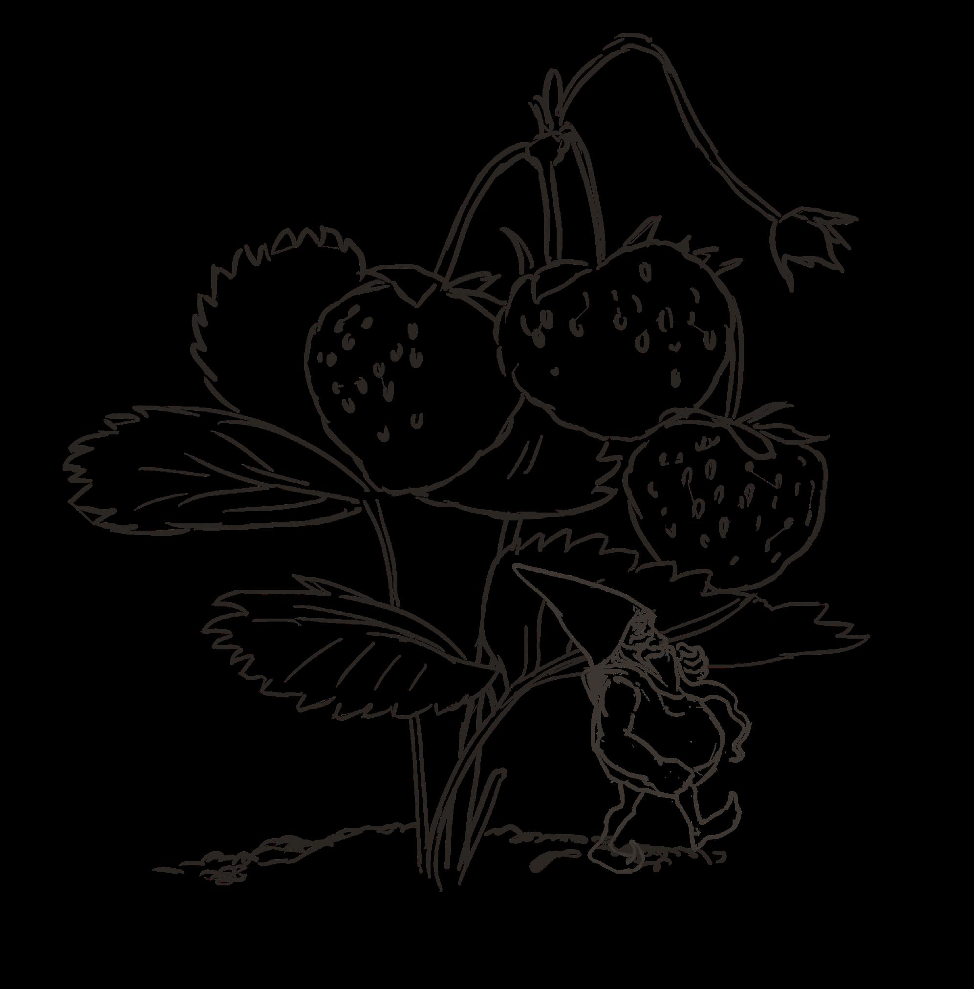 Krasnoludek i truskawki